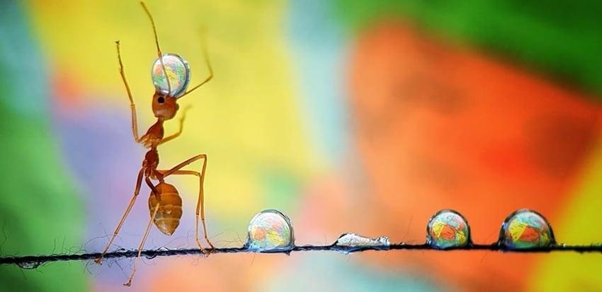 Ant Balancing the Earth by Analiza De Guzman