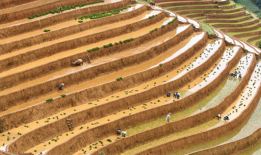 Farming by Diep Van