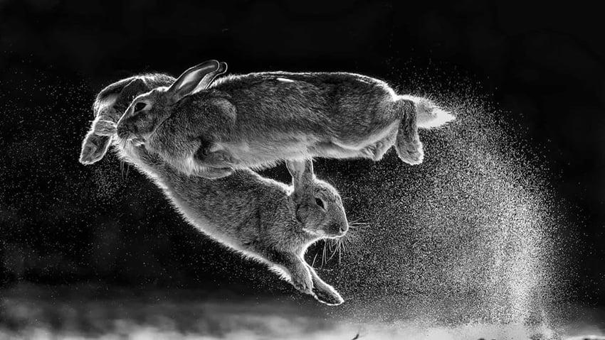 Jump by Csaba Daróczi- best photographs of 2019