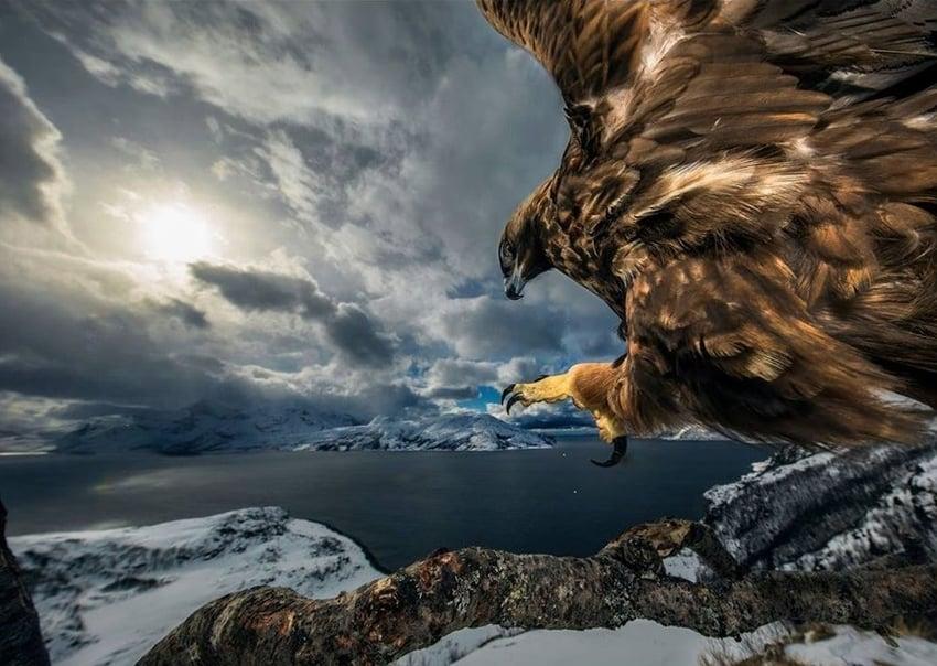 Land of the Eagle by Audun Rikardsen- best photographs