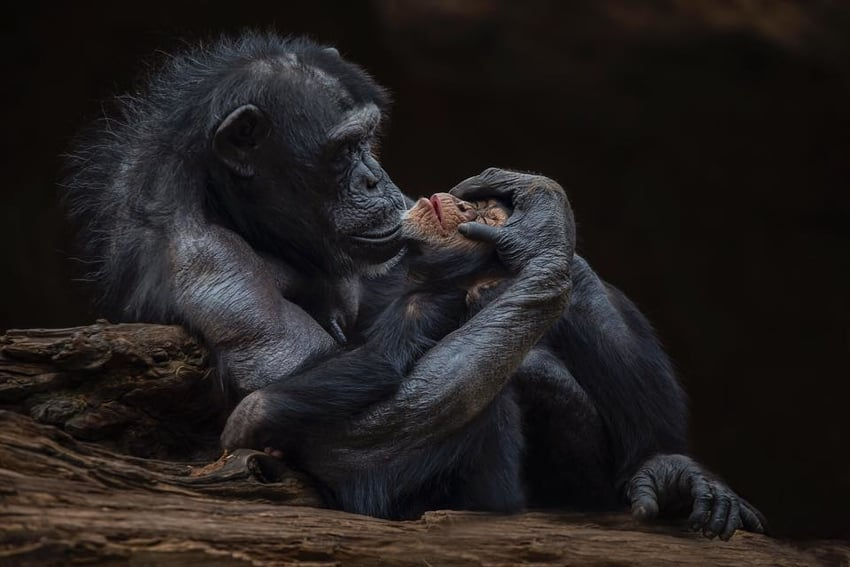 Motherly Love by Santiago Lopez-best photographs