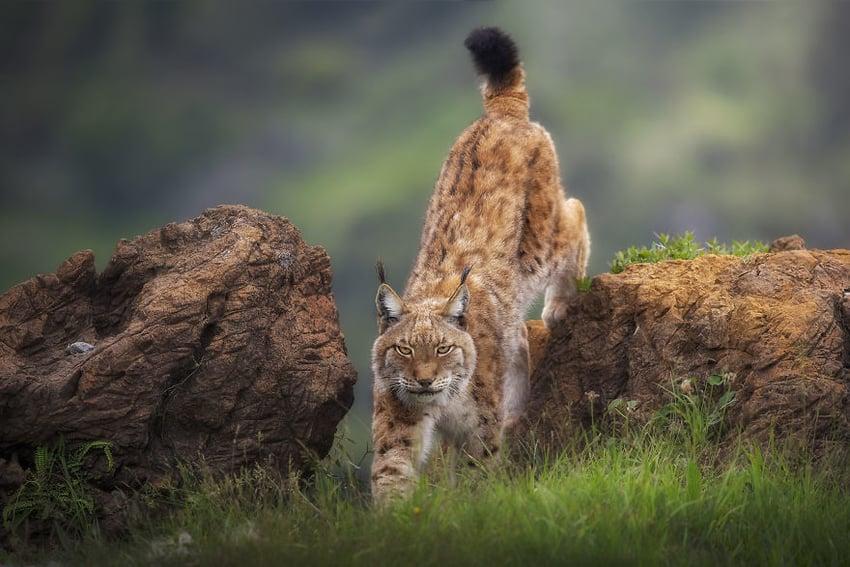 Wild Look by Sergio Saavedra