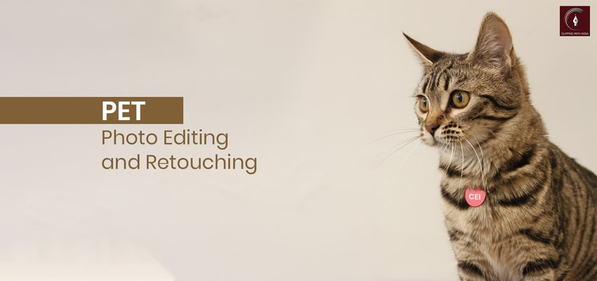 pet photo editing and retouching