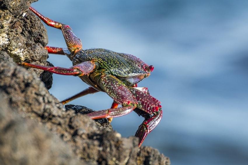 Crab macro shot