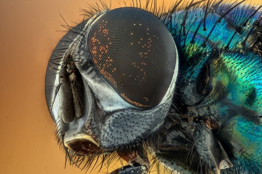 macro insect shot